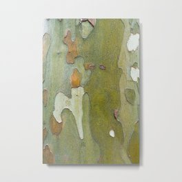 Sneaky Sycamore Metal Print