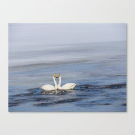 swans love of life Canvas Print