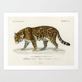 jaguar leopard panther Art Print