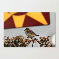 sparrow Canvas Prints featuring Sparrow by IowaShots