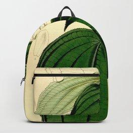 Amphiblemma cymosum 90 5473 Backpack
