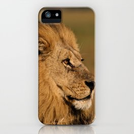Beautiful Lion in Desert iPhone Case