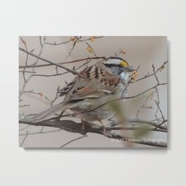 Feather Friend Metal Print