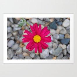 Pink Fleur Blurr. Art Print