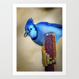 Thanksgiving Blue Jay Art Print