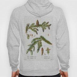 Black spruce Abies nigra and Silver fir Abies alba from Traite des Arbres et Arbustes que lon cultiv Hoody