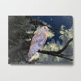 Snowy Owl Bird Stormy Sky A127 Metal Print