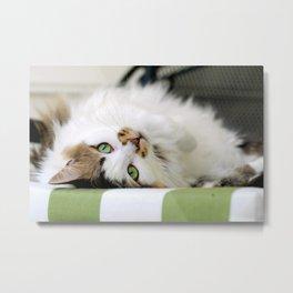 @somecallmefluff Fluff Sunning Her Furs on the Deck Metal Print