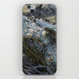 Natural Blue Rock with Limpets and Seaweed iPhone Skin