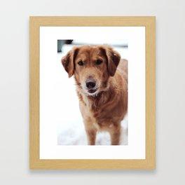 She's Golden Framed Art Print
