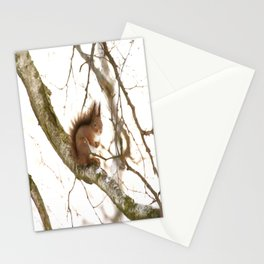 Little Squirrel On The Branch - Autumn Scene #decor #society6 #buyart Stationery Cards