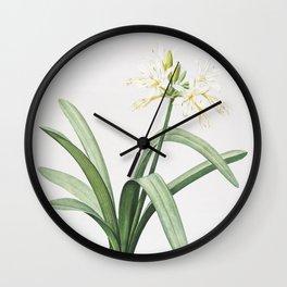 Vintage Pancratium Illyricum Illustration Wall Clock