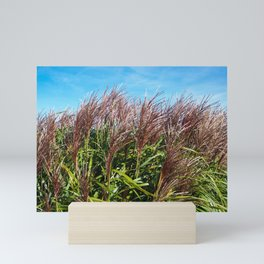 Chinese silver grass blowing in the breeze Mini Art Print