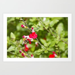 Busy bee in the flowers Art Print