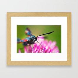 Burnet Moth Framed Art Print