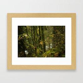 Portland Rainforest Framed Art Print