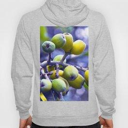 SICILIAN FRUITS Hoody