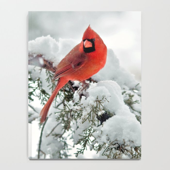 Cardinal on Snowy Branch #2 Notebook