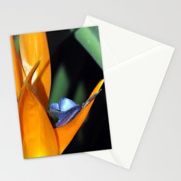 Flor Ave del Paraiso Stationery Cards