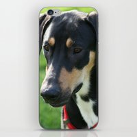 doberman iPhone & iPod Skins featuring Doberman by Ornithology