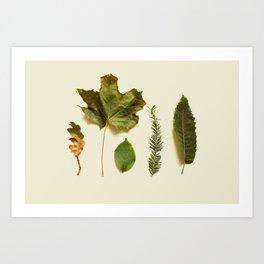 COMPOSIZIONE FOGLIE I Art Print