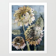 Three Sunflowers Art Print