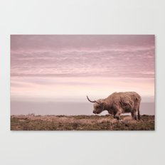 sunset and the highland cow Canvas Print