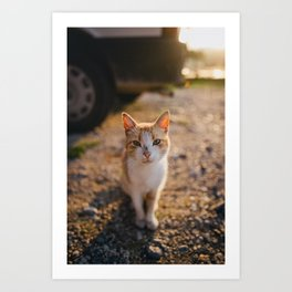Cat Looking into Camera Photography Gift Art Print