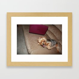 little yorkie Framed Art Print
