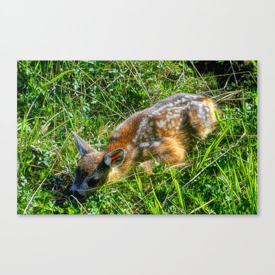 "Young ""Bambi"" Canvas Print"