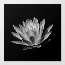 Upton Water Lily Canvas Print