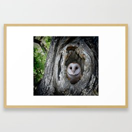 Barred Owl in a Tree Framed Art Print