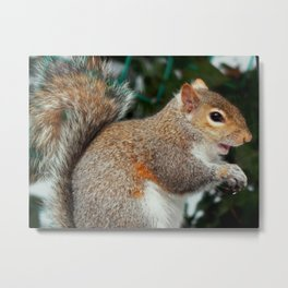 The sneaky one Metal Print