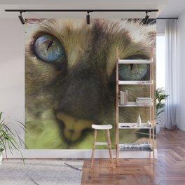 Cat's Eye Spy Wall Mural