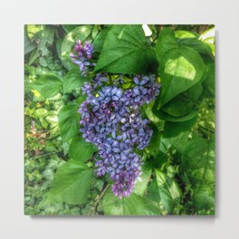 Lilacs in May Metal Print