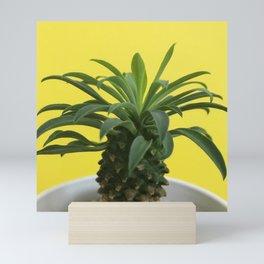 Euphorbia hypogaea(yellow) Mini Art Print