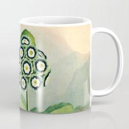 Auriculas : Temple of Flora Coffee Mug