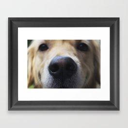Golden Nose Framed Art Print