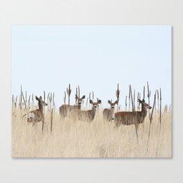 Deer In A Field of Grass Canvas Print