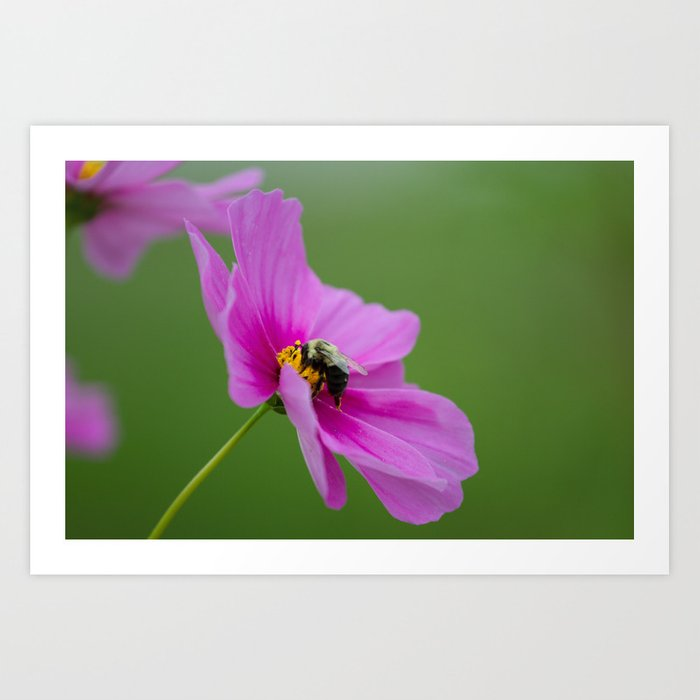 Bee on Cosmo Art Print