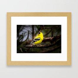 Goldfinch Framed Art Print