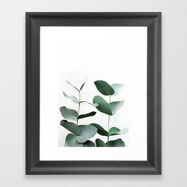 Eucalyptus 5 Framed Art Print