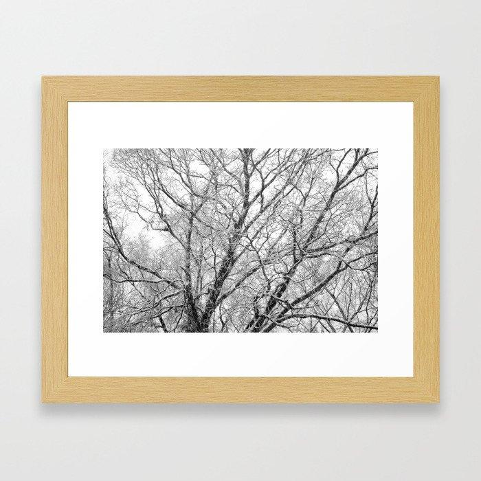 First Snow 2013 Framed Art Print