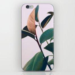 Ficus Elastica #4 iPhone Skin