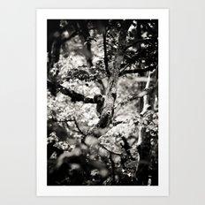 silver spring monkey Art Print