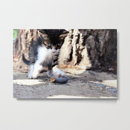 Playful Kitten Metal Print