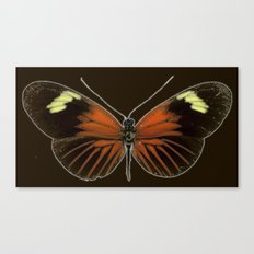 Untitled Butterfly Canvas Print