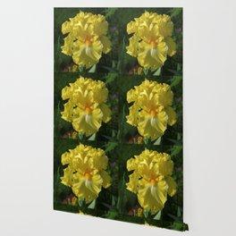 Golden Iris flower - 'Power of One' Wallpaper