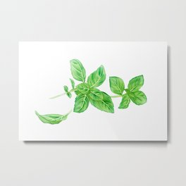 Watercolor Illustration of Fresh Basil Metal Print