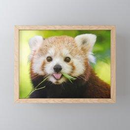 Amazing Cute Little Animal Chewing Food Ultra High Fidelity Framed Mini Art Print